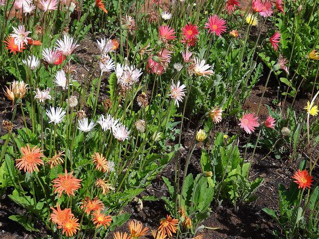 bloemfontein flowers