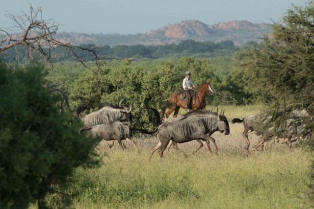 limpopo horse safari