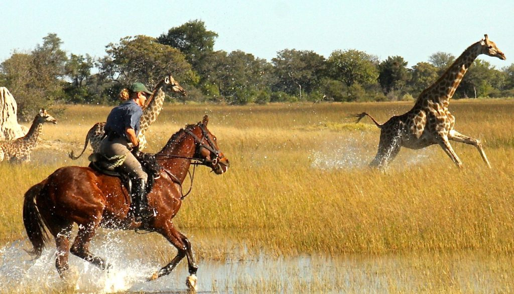 okavango horse safari