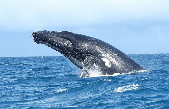 whale madagascar