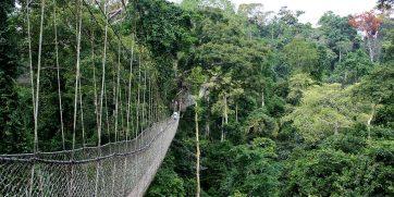 ghana tropical bridge
