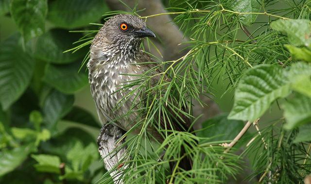 birds hwange
